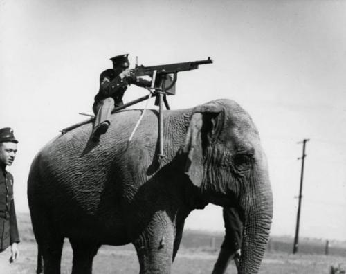 Elephant mounted machine gun 1914