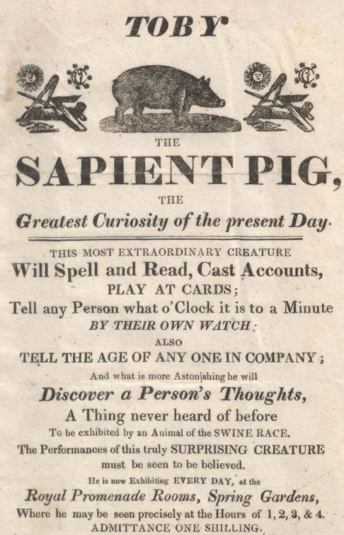 4-Toby-the-sapient-pig.jpg-max1000-2